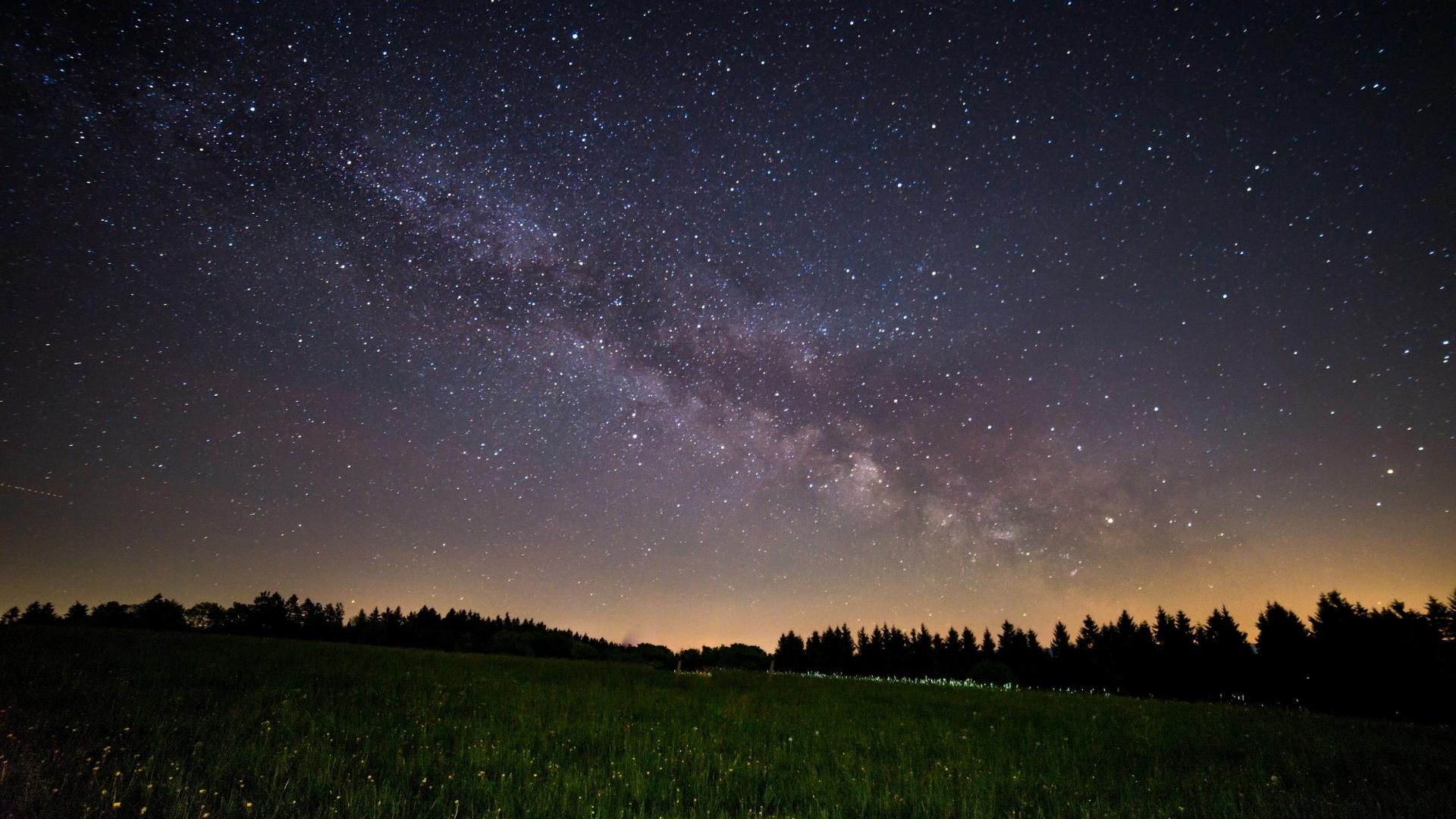Oak tree's night sky