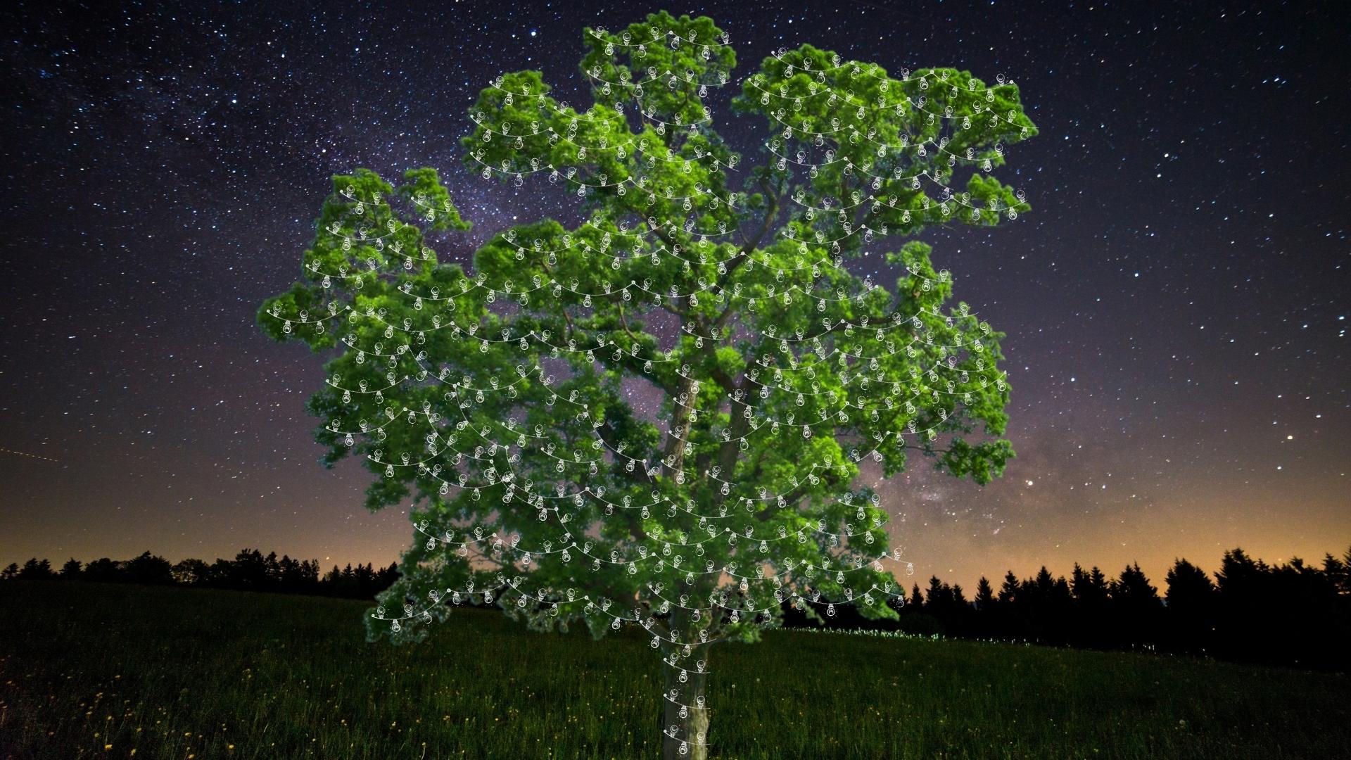 Tree with lights