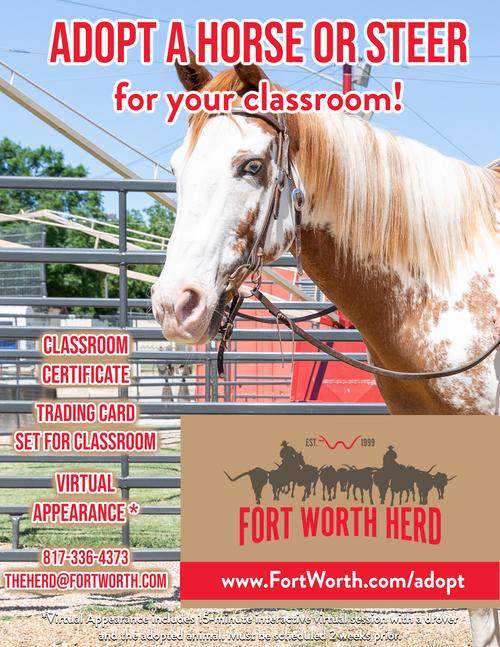 Classroom adoption horse
