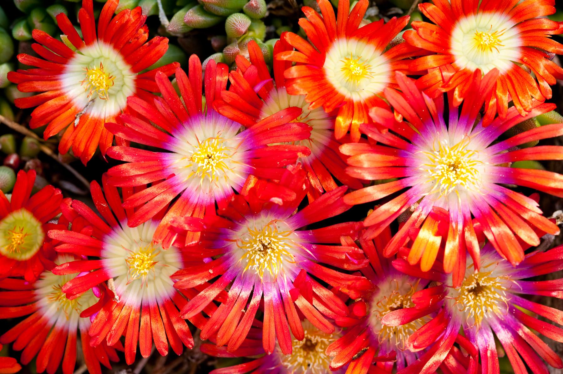 20100514 native plants 058