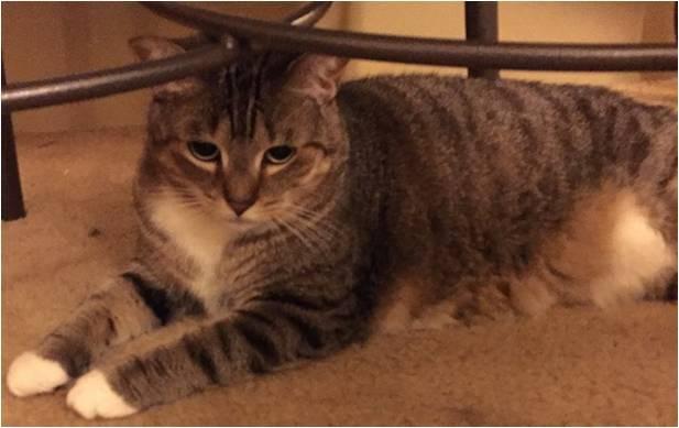 Shanklin cat