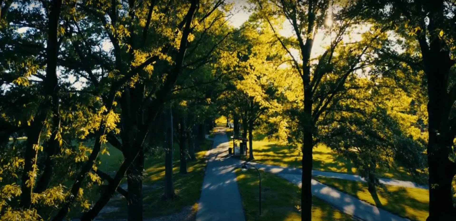 Mercer path