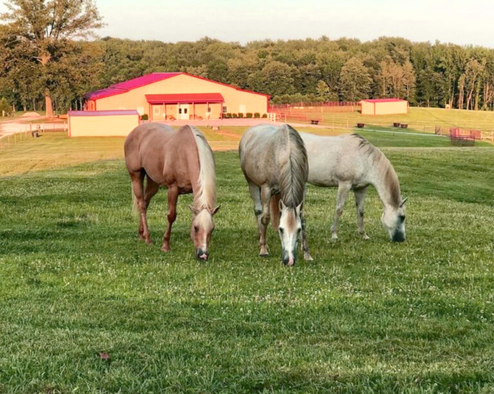 3 horses edited
