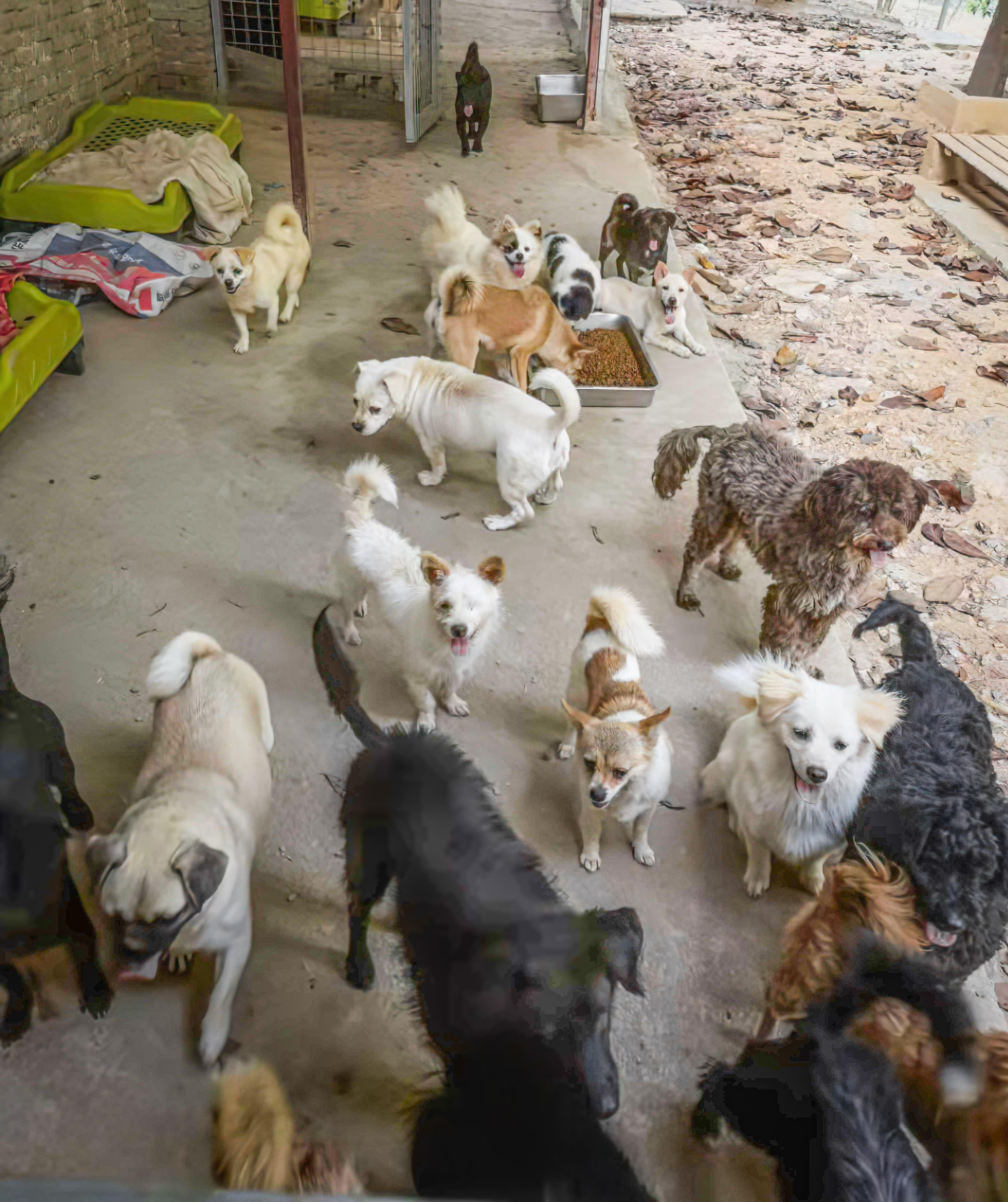 Dogs feeding 02