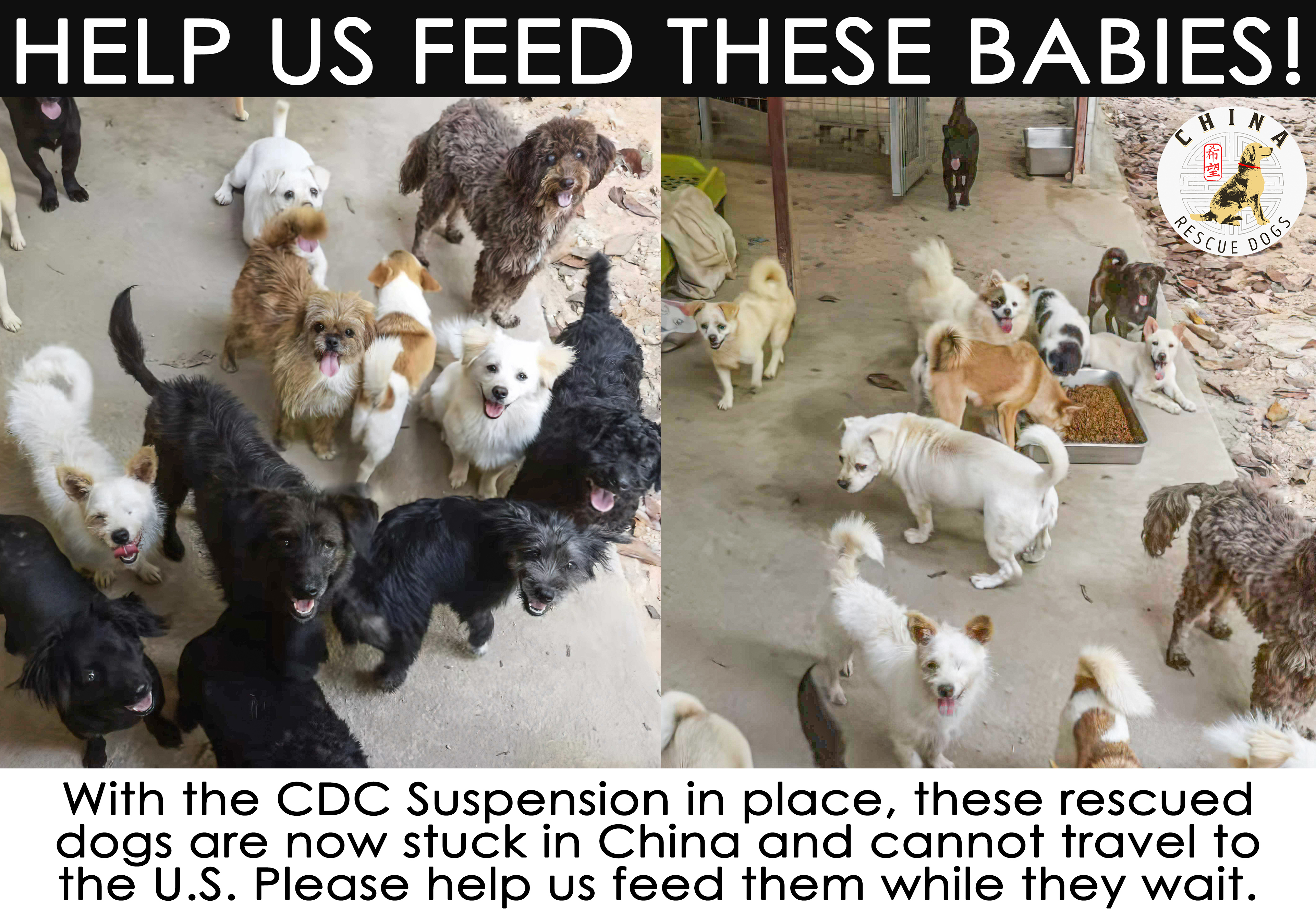 Feed the dogs master image %281%29