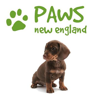 Animal Care Demo Logo