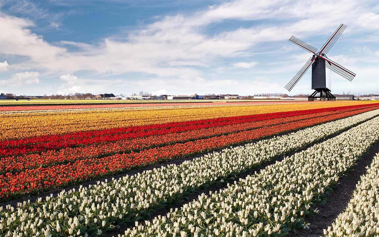 Netherlands1 web