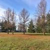 holts summit mature singles This property was built in 1978 12005 ohenry way is within  an acre and surrounded by mature trees that  at 12005 ohenry way holts summit,.