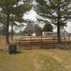 Mobile Home for Sale: TX, IVANHOE - 2010 SARATOGA single section for sale., Ivanhoe, TX
