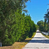 Mobile Home Park: Tarpon Glen, Tarpon Springs, FL