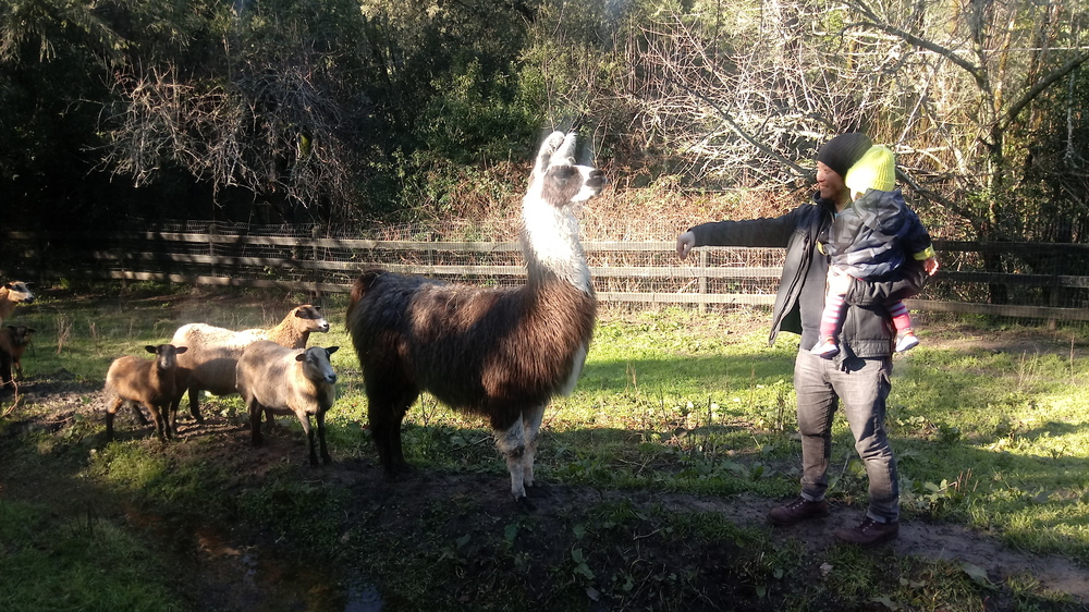 Shanti Permaculture Farm Rv Lot For Rent In Occidental Ca 1072889