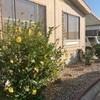 Mobile Home for Sale: Double Wide - Rialto, CA, Rialto, CA