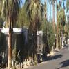 RV Park/Campground for Directory: Healing Waters M H & RV Park - Directory, Desert Hot Springs, CA