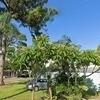 Mobile Home for Rent: Pine Ridge Mobile Home & RV Park, Pinellas Park, FL