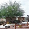 RV Lot for Sale: Desert Gardens RV Resort, Florence, AZ