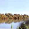 RV Park for Sale: River Ranch RV Park, Yuma, AZ