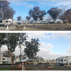 RV Park for Sale: Sommerville Almond Tree RV Park, Coalinga, CA