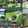 RV Park/Campground for Sale: Small Country Campground, Louisa, VA