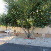 Mobile Home for Sale:     2 Bedroom 2 bath with Den        Beautifully Upgraded , Tucson, AZ