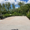 RV Lot for Rent: Holiday Cove RV Resort, Cortez, FL
