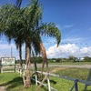 RV Park for Sale: Bay Area Mobile Home Park and RV Park, San Leon, TX