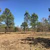 Mobile Home Lot for Sale: Agricultural,Mobile Home - Santee, SC, Santee, SC