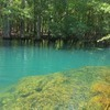 RV Lot for Sale: Manatee Springs , Old Town, FL
