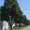 Mobile Home Park: Cottage Grove Estates, Cottage Grove, MN