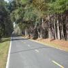 Mobile Home Lot for Sale: Agricultural,Mobile Home,Residential - Adams Run, SC, Adams Run, SC