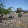 RV Lot for Rent: Snow Bird RV Space for Rent, Salome, AZ