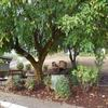 Mobile Home Park: Knoll Terrace  -  Directory, Canyonville, OR