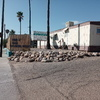 RV Lot for Rent: RV Lots for rent in All Age  / Family Community, , AZ