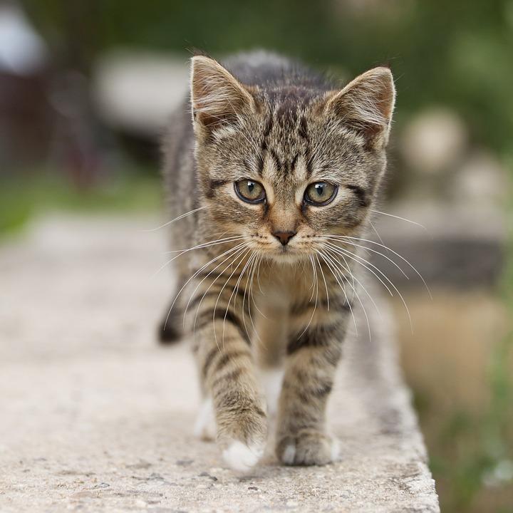 https://s3.amazonaws.com/model-server/inputs/kitten.jpg