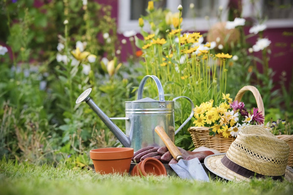 Pesticide-Free Gardening Tips