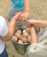 Preschool-in-saint-paul-dodge-nature-preschool-960603b12a41-normal