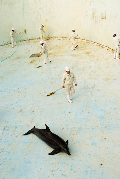 Wandering behind the scenes at a Japanese aquarium, where captive dolphins perform for the paying public, Huang-Ju came across this scene. 'I saw the workers scrubbing this tank,' he says, 'but then I suddenly realised there were dolphins lying in the drained pool.' It was a stark reminder of how different life in a sterile aquarium is to a dolphin's natural ocean habitat. 'I was shocked,' says Huang-Ju, 'at how the staff ignored the dolphin and didn't seem to be in any hurry to refill the pool.' Such captivity seemed a high price for the animal to pay just for human entertainment. Photo by: Huang-Ju Chen (Taiwan) / 2012: Veolia Environnement The World in Our Hands Award, Commended.