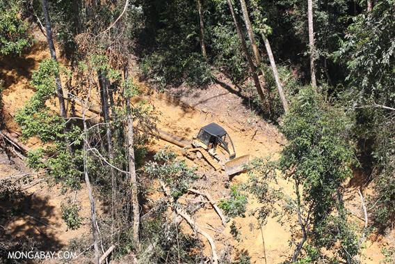 Logging operation in Borneo.