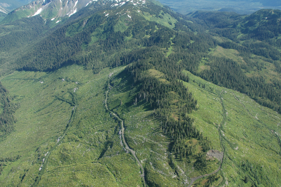 Aerial view of clearcut logging on mountain side. Photo courtesy of the Sitka Conservation Society.