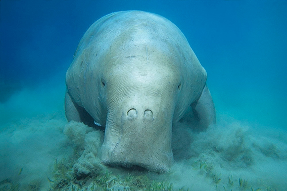 Located in between Nampula and Zambezia Provinces, this new coastal marine reserve is a key breeding site for dugong. Photo courtesy of WWF.
