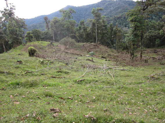 Deforestation in the region. Photo courtesy of Jane Lyons.