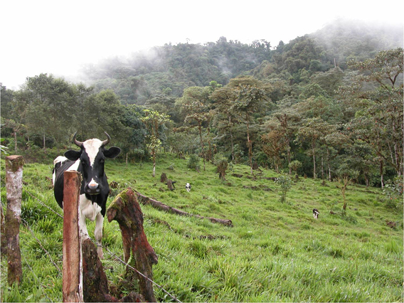 Deforestation for cattle ranching poses a major threat to the region's cloud forests. Photo courtesy of Jane Lyons.