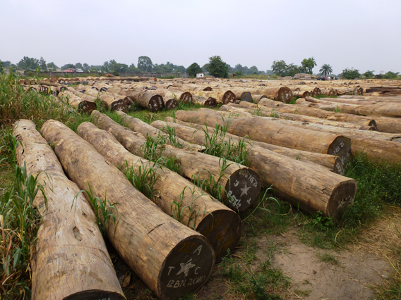 Raw logs cut with artisanal permits at Kinkole port near Kinshasa. Photo courtesy of Global Witness.
