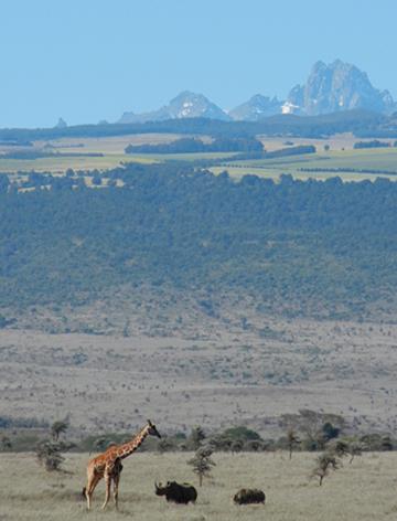 Mount Kenya viewed from Lewa. Photo courtesy of LWC.
