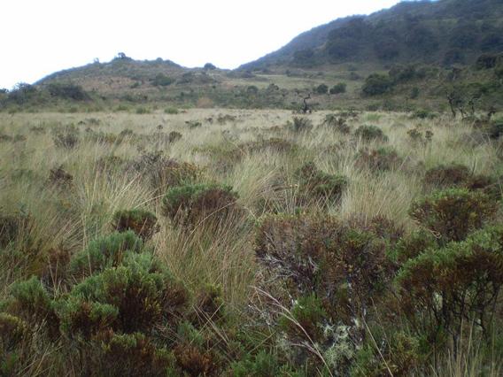 Paramo grassland. Photo by: César Medina.