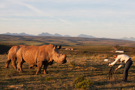 Anne Goddard filming white rhinos for her short film Rhino Wars. Image courtesy of Anne Goddard.