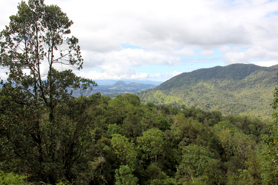 Cloud forest at the Ebano Verde Scientific Preserve. Photo by: Tiffany Roufs.