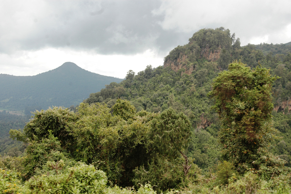 The Harenna forest near the Bale Mountains in Ethiopia. Photo courtesy of: Klaus Eulenberger.