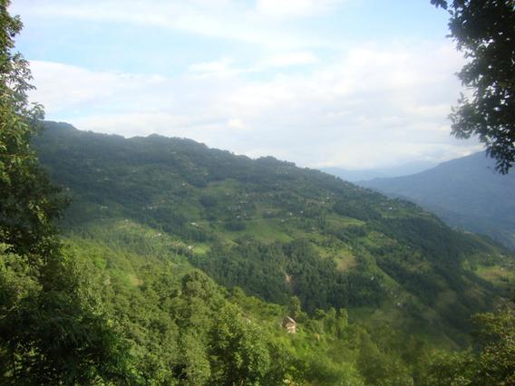 Pangolin habitat in Nepal. Photo by: Ambika Khatiwada.