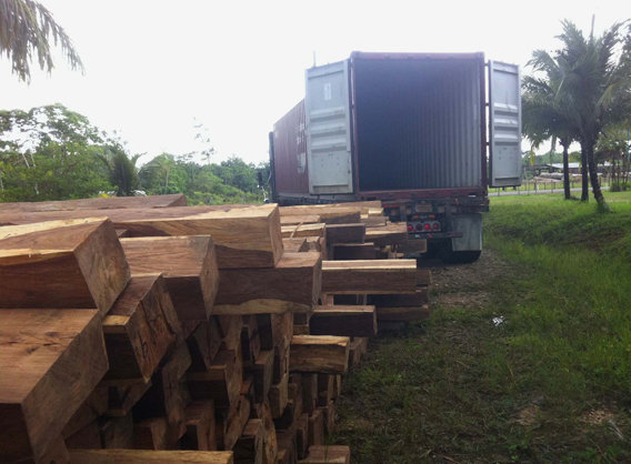 Rosewood logging in Belize. Photo by: Will Maheia.