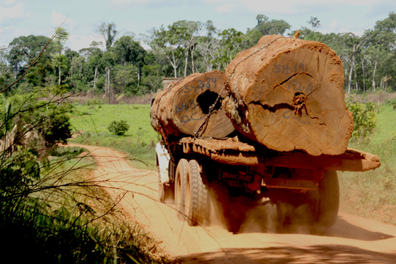 Logging truck near the lower Las Piedras. Photo courtesy of Paul Rosolie.